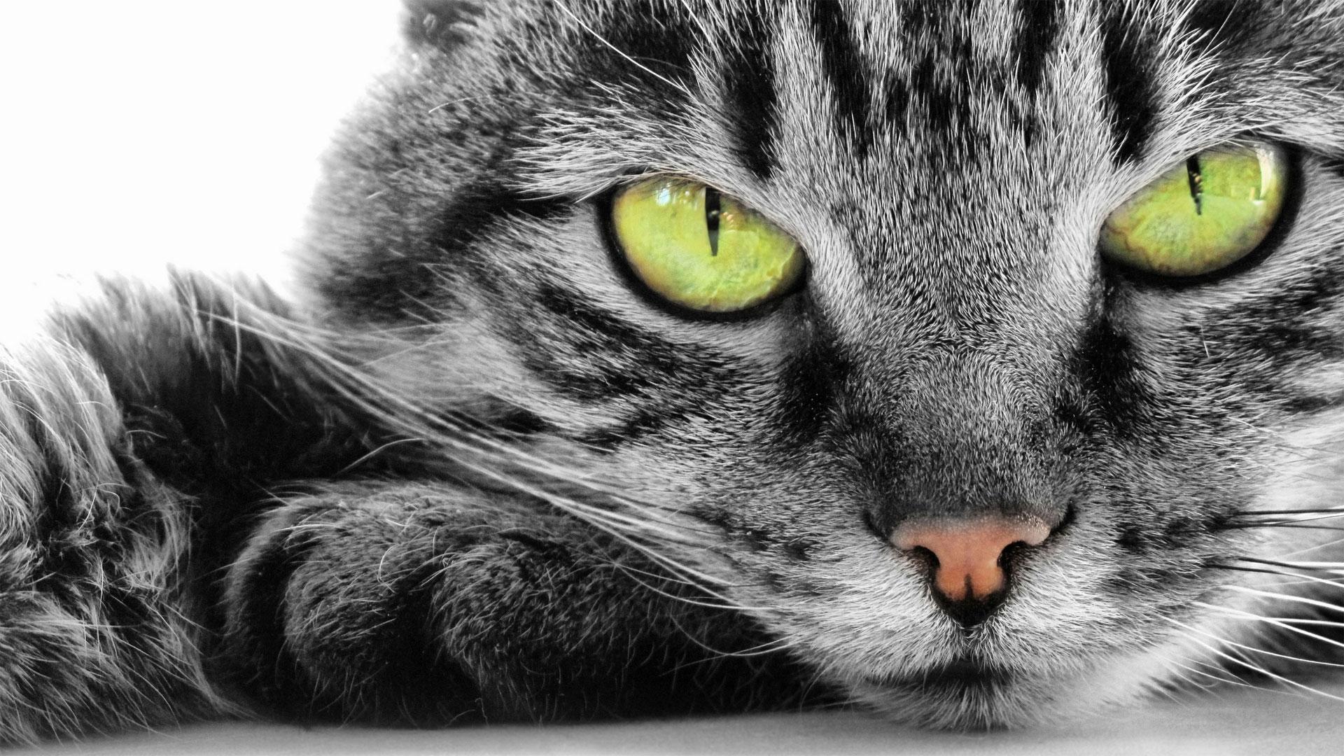 Как сделать кошачью голову фото 342
